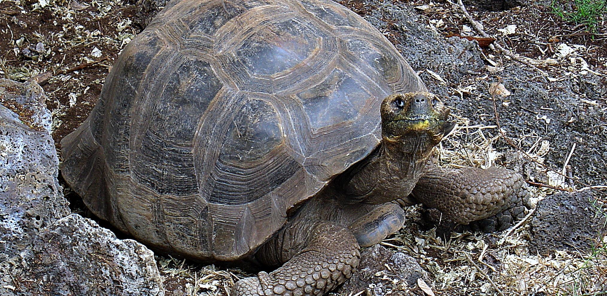 Üzenet az óriásteknősöktől: Vedd már észre MAGAD!