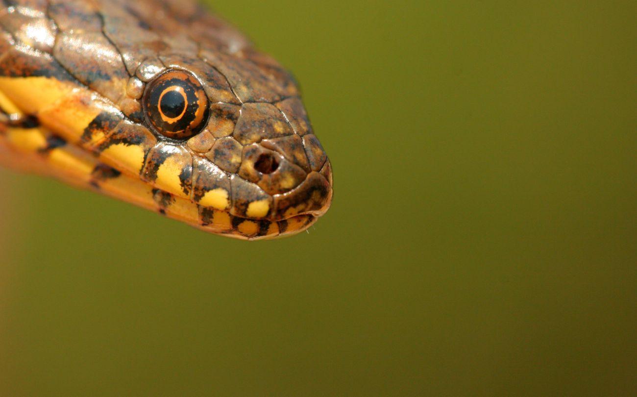 A kígyó a farkába harap, avagy a cégtulaj és az ideális utód